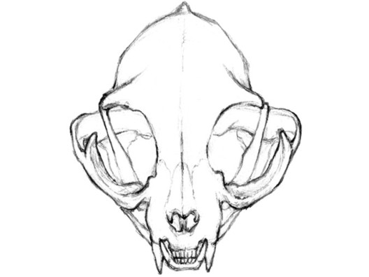 mar-del-valle-cat-skull-dest4